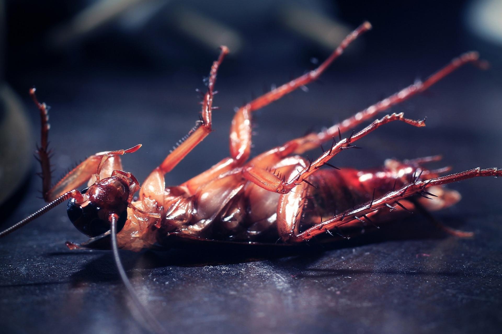 Control de Plagas de Cucarachas