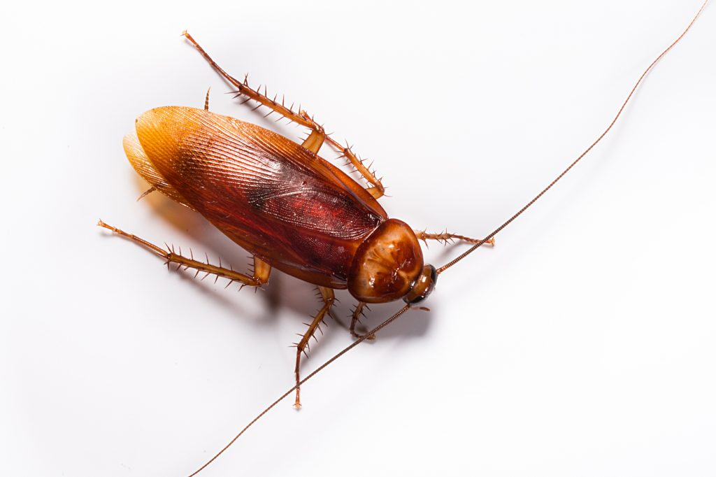 Precios de Tratamientos de Cucarachas