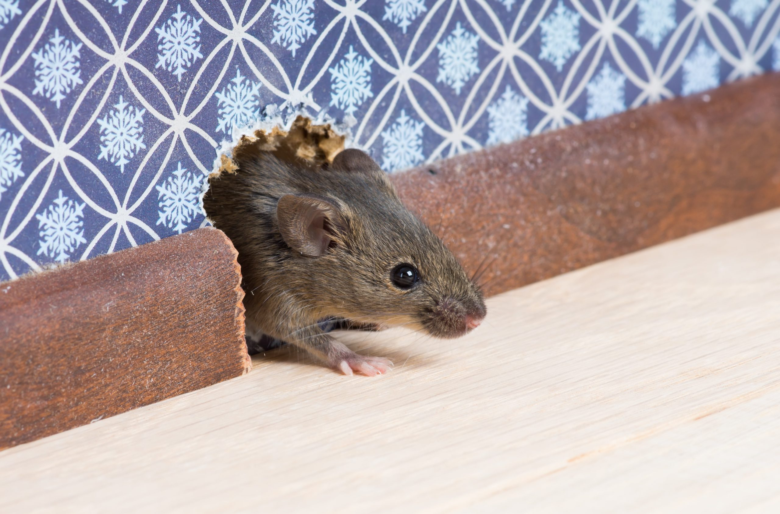 Nido de Ratones
