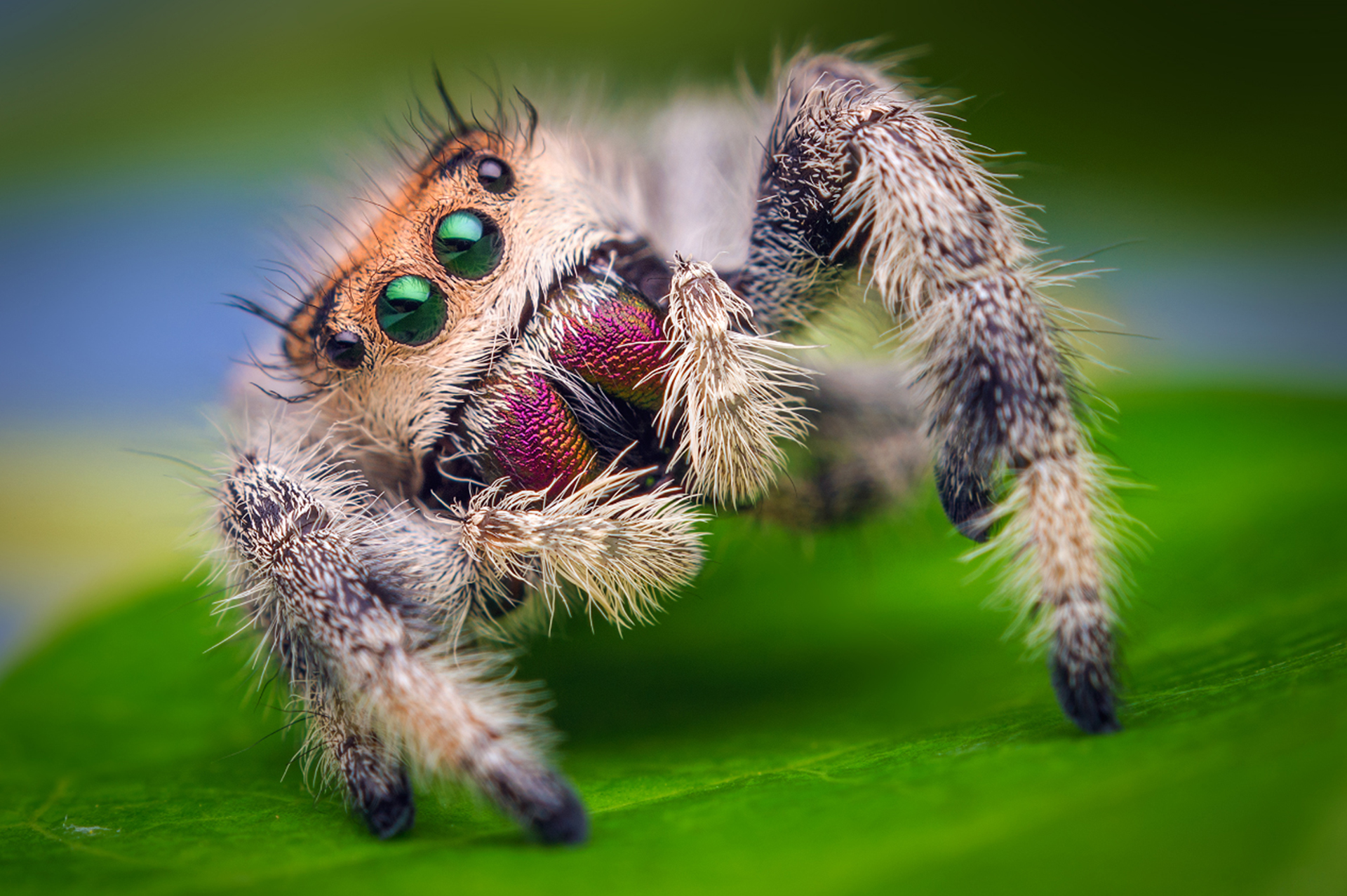 Plagas de Arañas