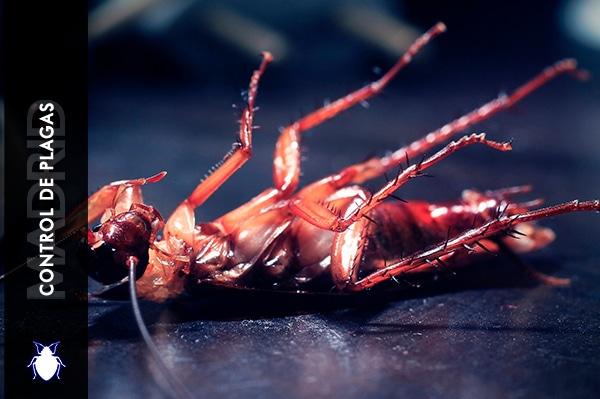 Control de Plagas Madrid Cucarachas