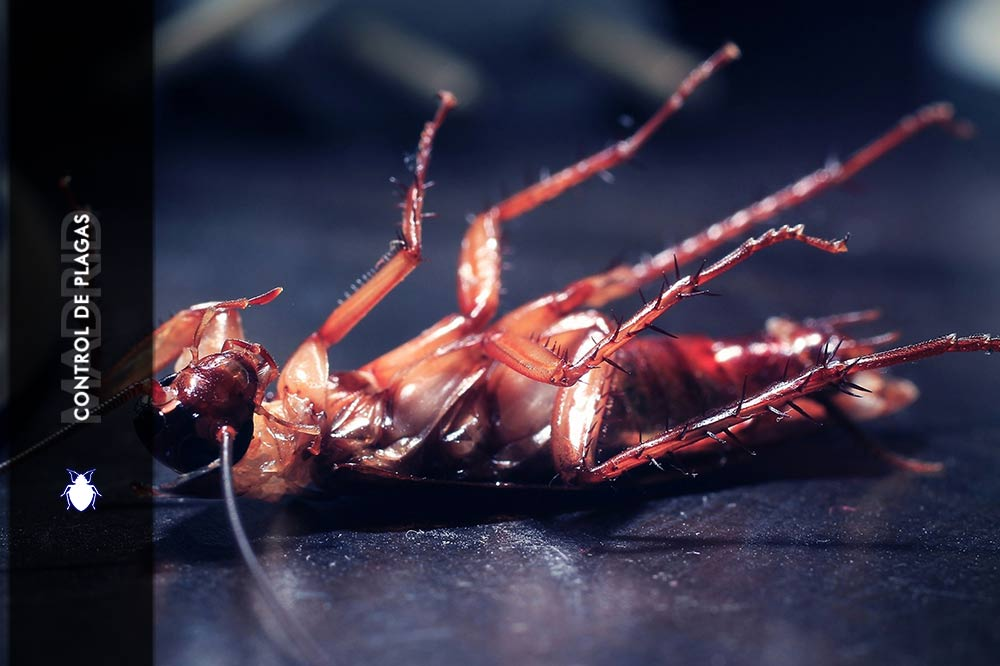 Como matar Cucarachas Control de Plagas Madrid