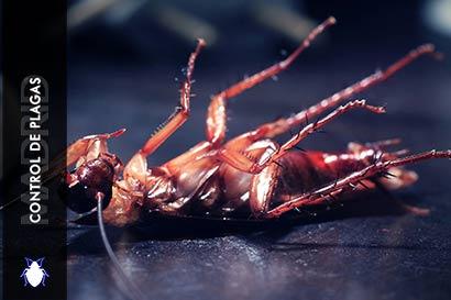 Control de Plagas Madrid ¿Como eliminar cucarachas?